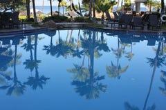 Réflexions de palmier Photographie stock libre de droits