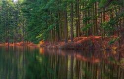 Réflexions de rivage de forêt Images stock