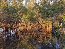 Réflexions de rivière Images stock
