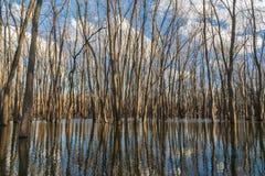 Réflexions de rivière Photo stock