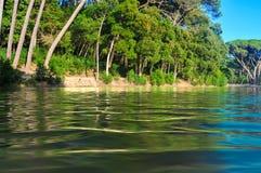 Réflexions de végétation sur l'eau photographie stock libre de droits