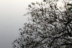 Réflexions des arbres Photographie stock