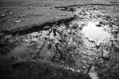 Réflexions des arbres Photographie stock libre de droits