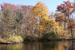 Réflexions des arbres dans la chute au-dessus de l'eau Photo libre de droits