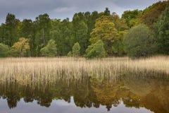 Réflexions des arbres sur le loch pityoulish Photo libre de droits