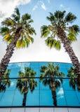 Réflexions des palmiers dans le bâtiment Image stock