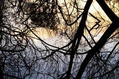 Réflexions foncées d'arbre sur les piscines tôt de ressort image libre de droits