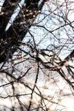 Réflexions minuscules de lumière du soleil sur des branches d'arbre dans le matin après tempête de pluie verglaçante Photos stock