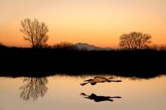 Réflexions silhouettées d'arbre Photographie stock libre de droits