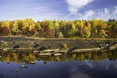 Réflexions sur le fleuve, automne Photos stock
