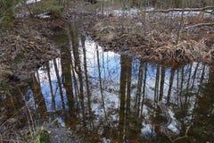 Réflexions sur un ruisseau Photos stock