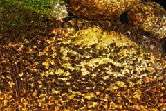 Réfraction d'eau de rivière images libres de droits