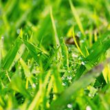 Régénérez l'herbe photo stock