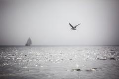 Régate d'oiseaux de vol et de bateaux à voile avec les voiles blanches images stock