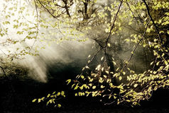 Régfion boisée avec du brouillard Images libres de droits