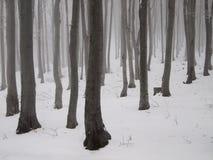 Régfion boisée mystique de l'hiver Photographie stock