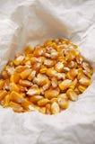 Régime de nourriture de maïs Photo stock
