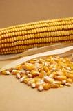 Régime de nourriture de maïs Photos stock