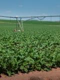 Région agricole avec des collectes de ligne photographie stock libre de droits