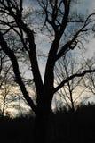 Région boisée automnale anglaise Photographie stock