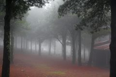 Région boisée brumeuse éthérée Photographie stock libre de droits