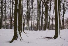 Région boisée d'hiver après chutes de neige photographie stock libre de droits