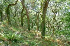 Région boisée de chêne de Gallois Photographie stock