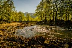 Région boisée de Lakeside Photo stock