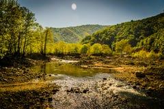 Région boisée de Lakeside Photo libre de droits