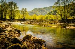 Région boisée de Lakeside Photographie stock
