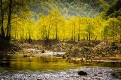 Région boisée de Lakeside Photos libres de droits