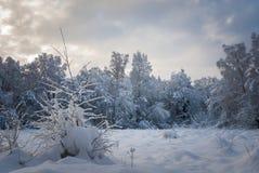 Région boisée de Nethybridge Photo libre de droits