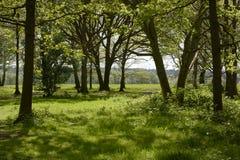Région boisée de printemps surrey l'angleterre Image libre de droits