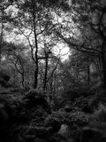 Région boisée de vallée photos stock