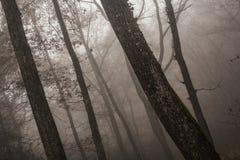 Région boisée dramatique au crépuscule Photographie stock libre de droits