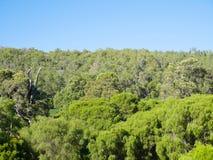 Région boisée et vally Photos stock