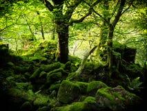 Région boisée vert clair intense Images libres de droits