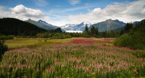 Région de calotte glaciaire de Stikine de Wildflowers d'été de glacier de Mendenhall Photos stock
