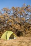 Région de camping avec les tentes multicolores dans la forêt Images libres de droits