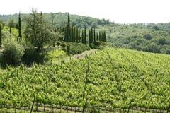Région de chianti en Toscane (Italie) image stock