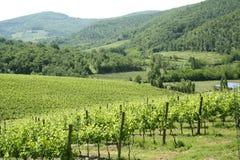 Région de chianti en Toscane (Italie) images libres de droits
