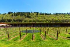 Région de chianti, Italie - 20 avril 2018 : L'établissement vinicole de Classico de chianti de nel d'Antinori photos stock