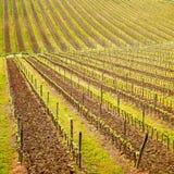 Région de chianti, modèle de vignoble ou fond. La Toscane, Italie photo stock