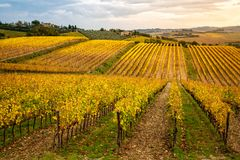 Région de chianti, Toscane, Italie Vignes en automne photo stock