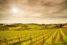 Région de chianti, vignoble de Panzano, arbres et ferme sur le coucher du soleil. Tusc photographie stock libre de droits