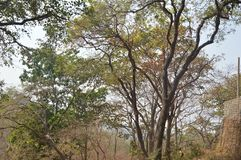 Région de forêt dans Mumbai Inde photos libres de droits