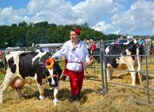 Région de Kaliningrad, Russie L'éleveur d'agriculteur-bétail conduit sur une laisse une vache de noir et la race d'habit bariolé  photo stock
