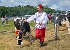 Région de Kaliningrad, Russie Les laisses masculines d'éleveur de bétail une vache de noir et race bariolée Vacances agricoles Image libre de droits