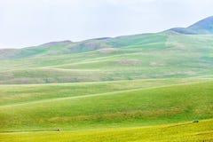 Région de steppe d'Ulagai Images libres de droits