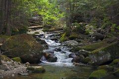 Région de Washinton de bâti de Sream de rivière par l'intermédiaire de traînée de ravin d'Ammonoosuc Photo stock